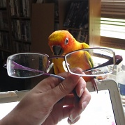 16th Mar 2012 - Sunglasses - March Challenge (with added parrots)