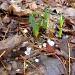 Hailing Spring! by sunnygreenwood