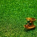 green by summerfield