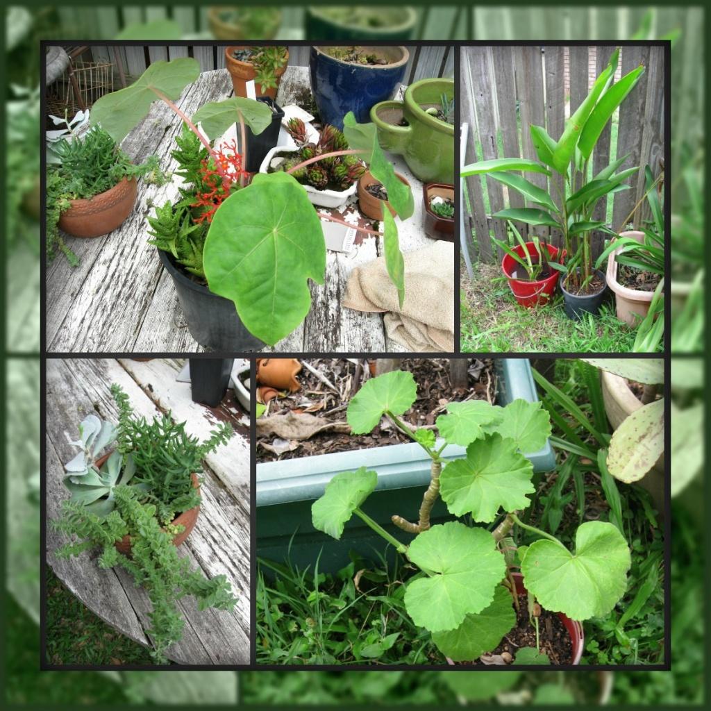 The Great Plant Bargain! by mozette