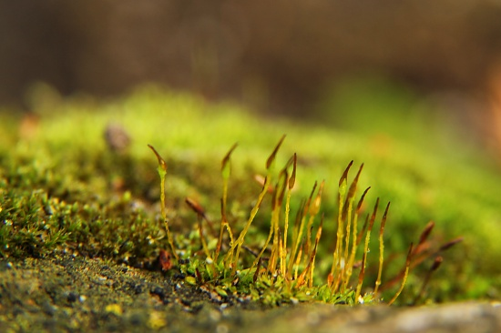 Worm's eye view... by northy