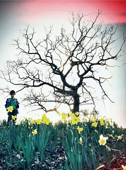 Jack Among The Daffs by rich57