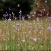 Wildflowers... best viewed large! by marlboromaam