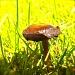 My first Mushroom by maggiemae