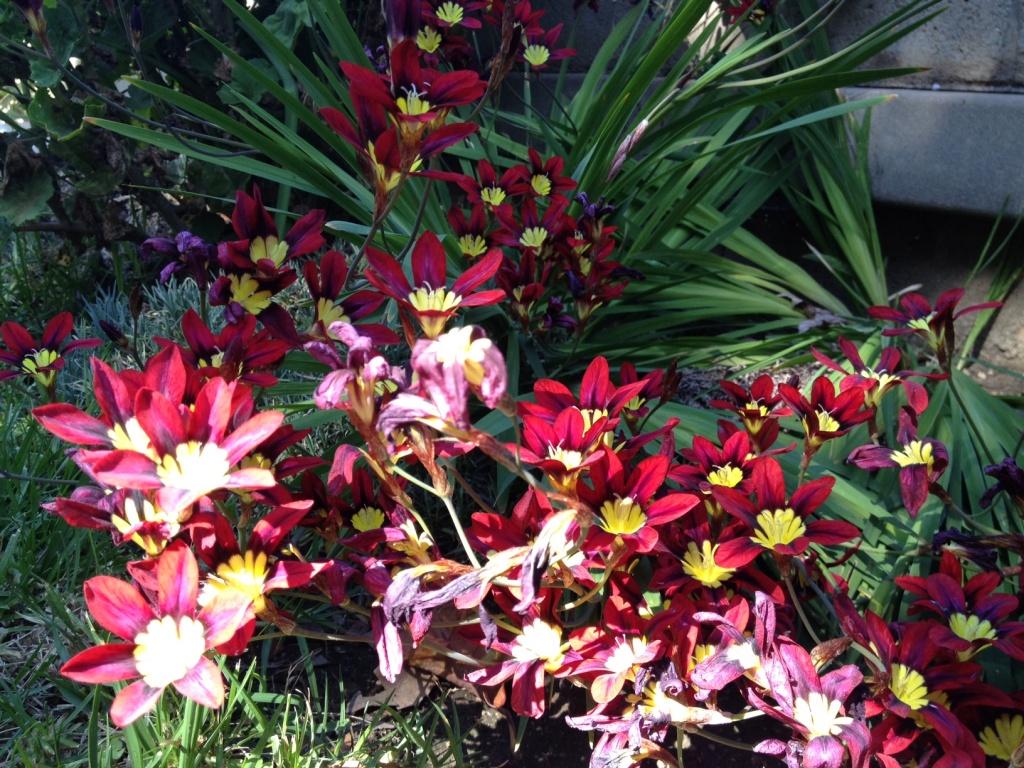 USC Bloom? by msfyste