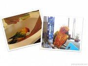 22nd Mar 2012 - Kitchen sink - March challenge (with added parrots)