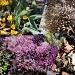 Botanical garden by bruni