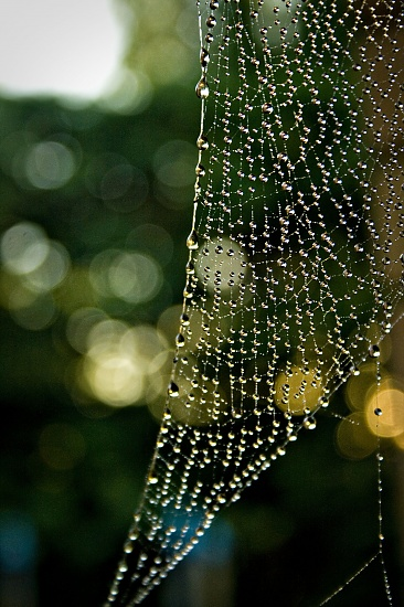 cobwebs in my head by corymbia