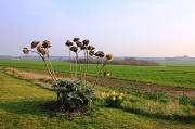 23rd Mar 2012 - Thistles and Fields