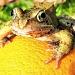 Frogmorange by filsie65