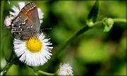 26th Mar 2012 - Butterflies make me smile!