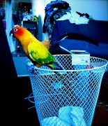 28th Mar 2012 - Rubbish - March challenge (with added parrots)