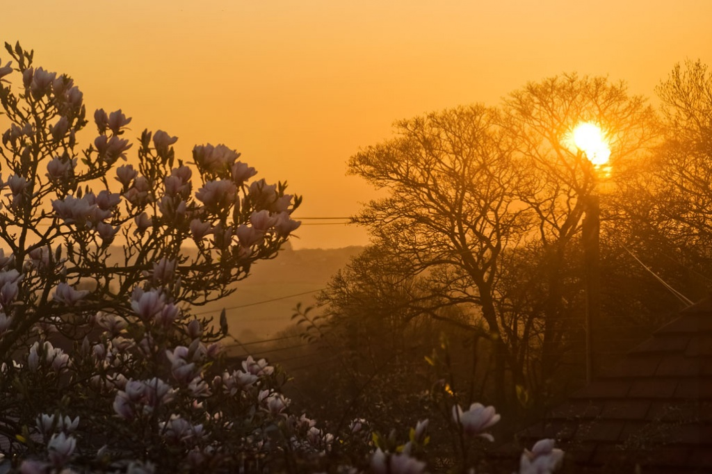Magnolia Sunset by harveyzone