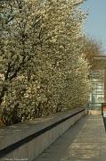 28th Mar 2012 - White spring