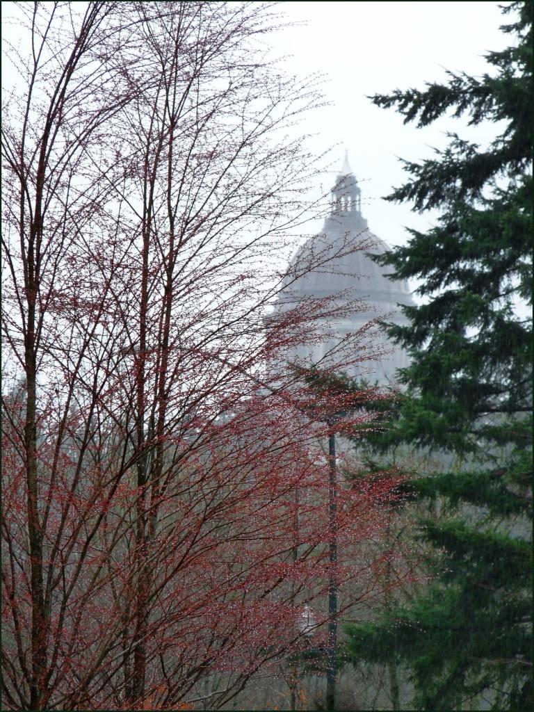 misty dome by reba