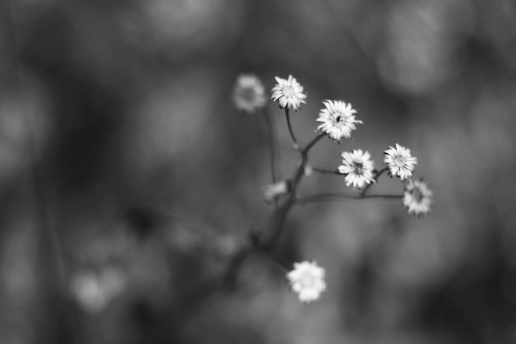 Wildflowers by laurentye