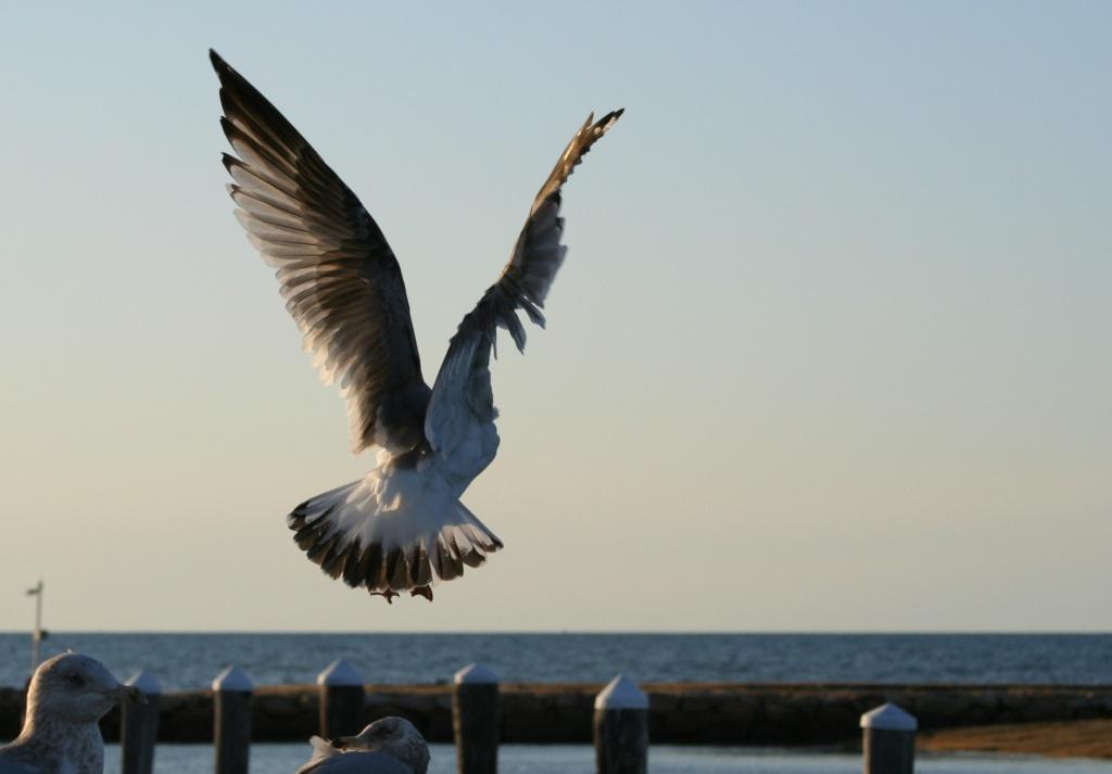Taking Flight by lauriehiggins