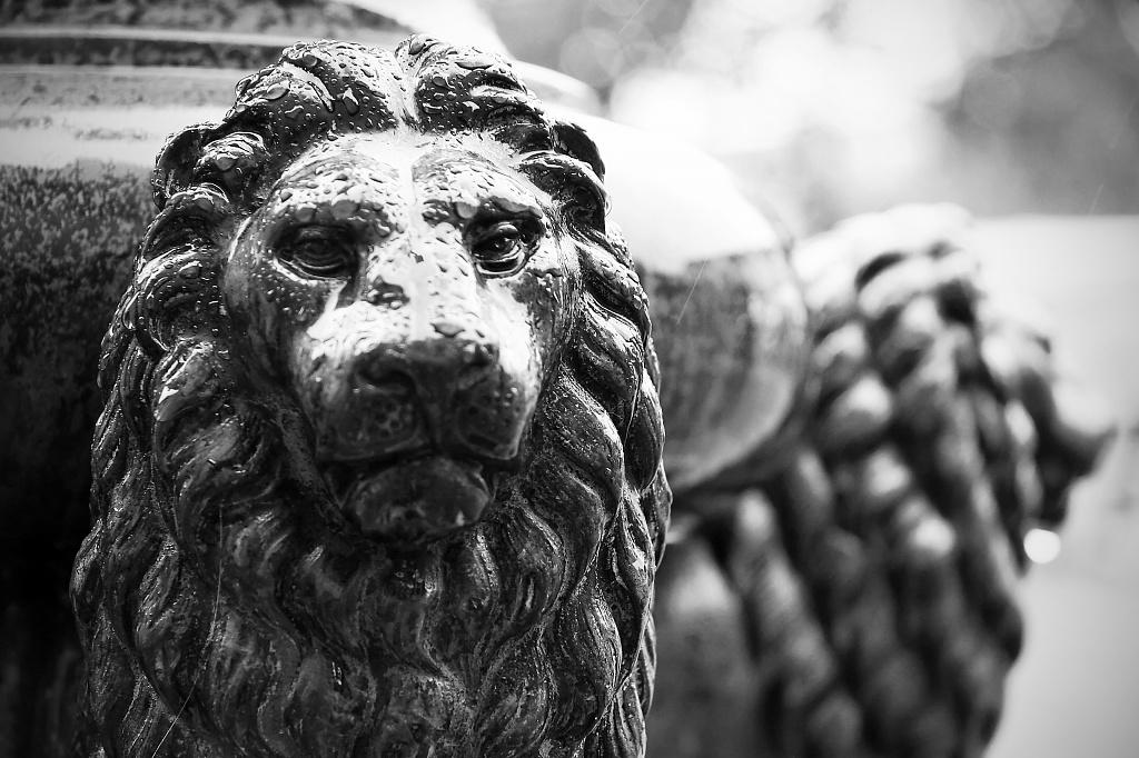 Lamp Lion by harvey