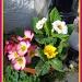 Doorstep flowers by jmj