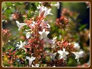 1st Apr 2012 - Honeyeater's Dream Home