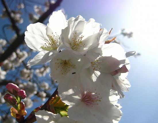 Sunny Blossom by filsie65