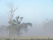 2nd Apr 2012 - Autumn Mist