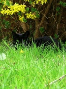 2nd Apr 2012 - Cats Eyes