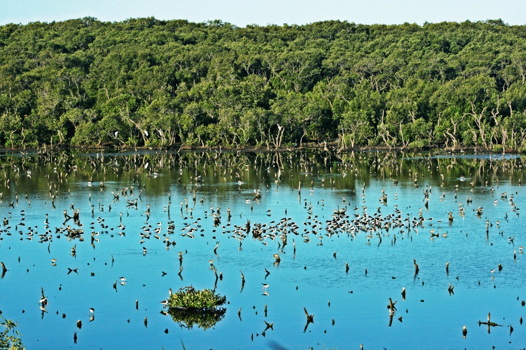 Wynnum Wetlands by corymbia
