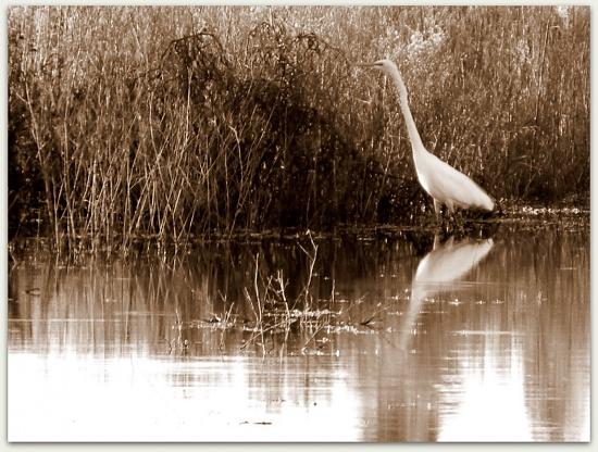 Birdwatching by ubobohobo