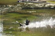 28th Aug 2017 - Water Aerobics