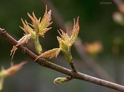 6th Apr 2012 - A leaf ballet...