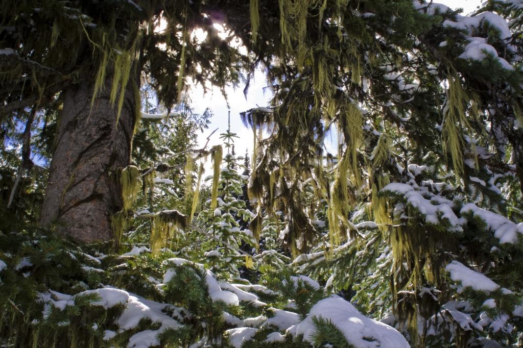 Deep, dark jungles by kiwichick