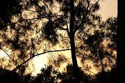 27th Aug 2017 - Autumn dusk