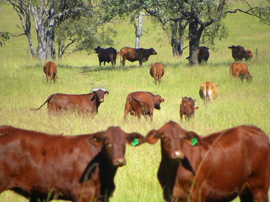 Mid-morning on the Farm by ubobohobo