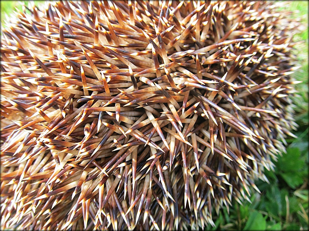Prickles. by happypat