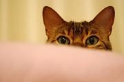 4th Apr 2012 - Peek-a-boo