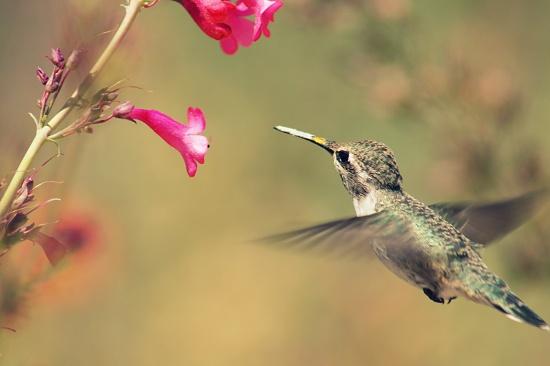 Little Hummingbird by kerristephens