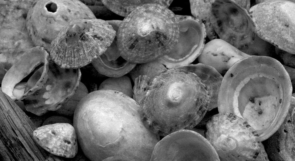 Shells by netkonnexion