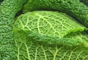 27th Mar 2012 - Cabbage