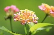 14th Aug 2017 - Fairy Bouquet