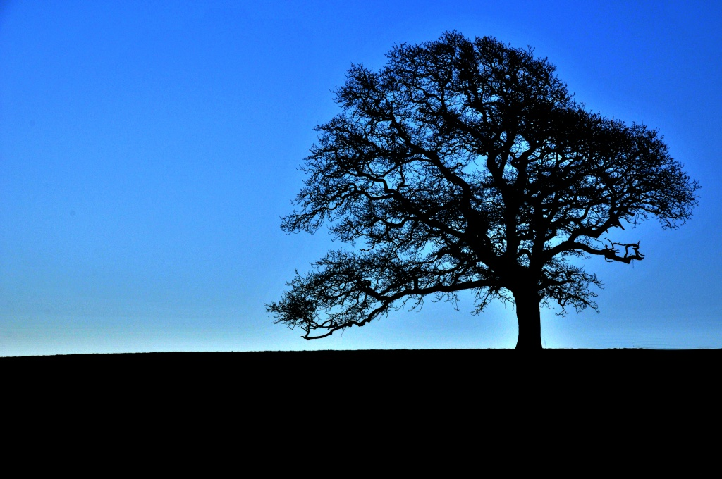 One Tree Hill by seanoneill