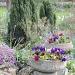 My garden by rosiekind