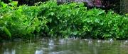 18th Apr 2012 - April Showers