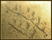 19th Apr 2012 - Aboriginal Art?