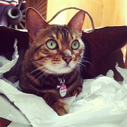 18th Apr 2012 - Cat in a Bag
