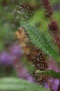 21st Apr 2012 - Water Web