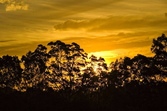 sunset by corymbia