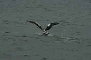 22nd Apr 2012 - Wing Span