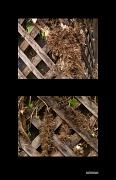 23rd Apr 2012 - Ivy art or destruction...