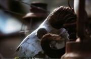 22nd Apr 2012 - Greenhouse guardian
